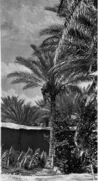 Harvesting dates (?), Palm tree, Mesopotamia, 1917